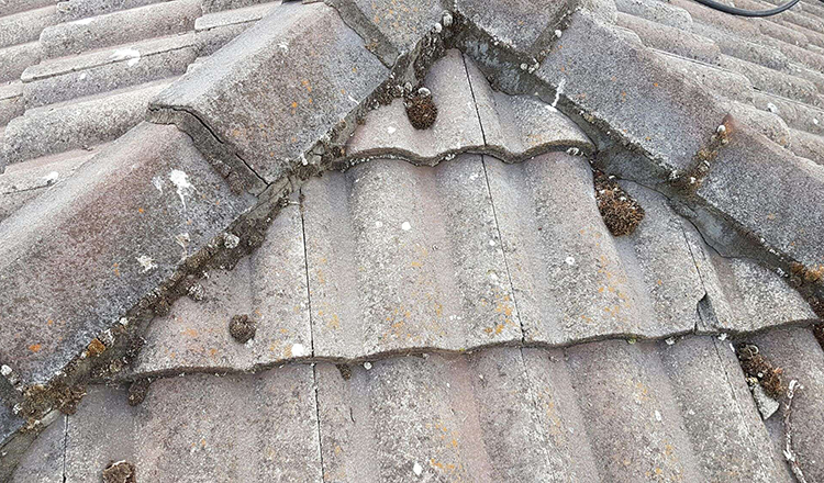 Old tiles - re pointing